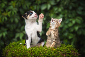 Nationwide Pet Insurance: The best choice for your pet?