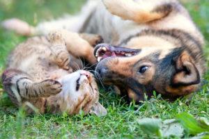Best Pet Insurance Companies 2020