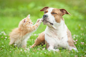 Healthy Paws Pet Insurance: Is it the right choice?