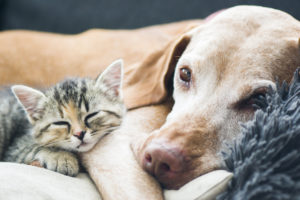 Embrace Pet Insurance: Is it the right choice?