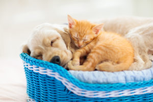 ASPCA Pet Insurance: Is it the right choice?