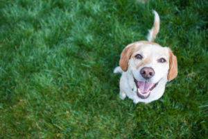 Dog Insurance: Health insurance for Your Furry Best Friend