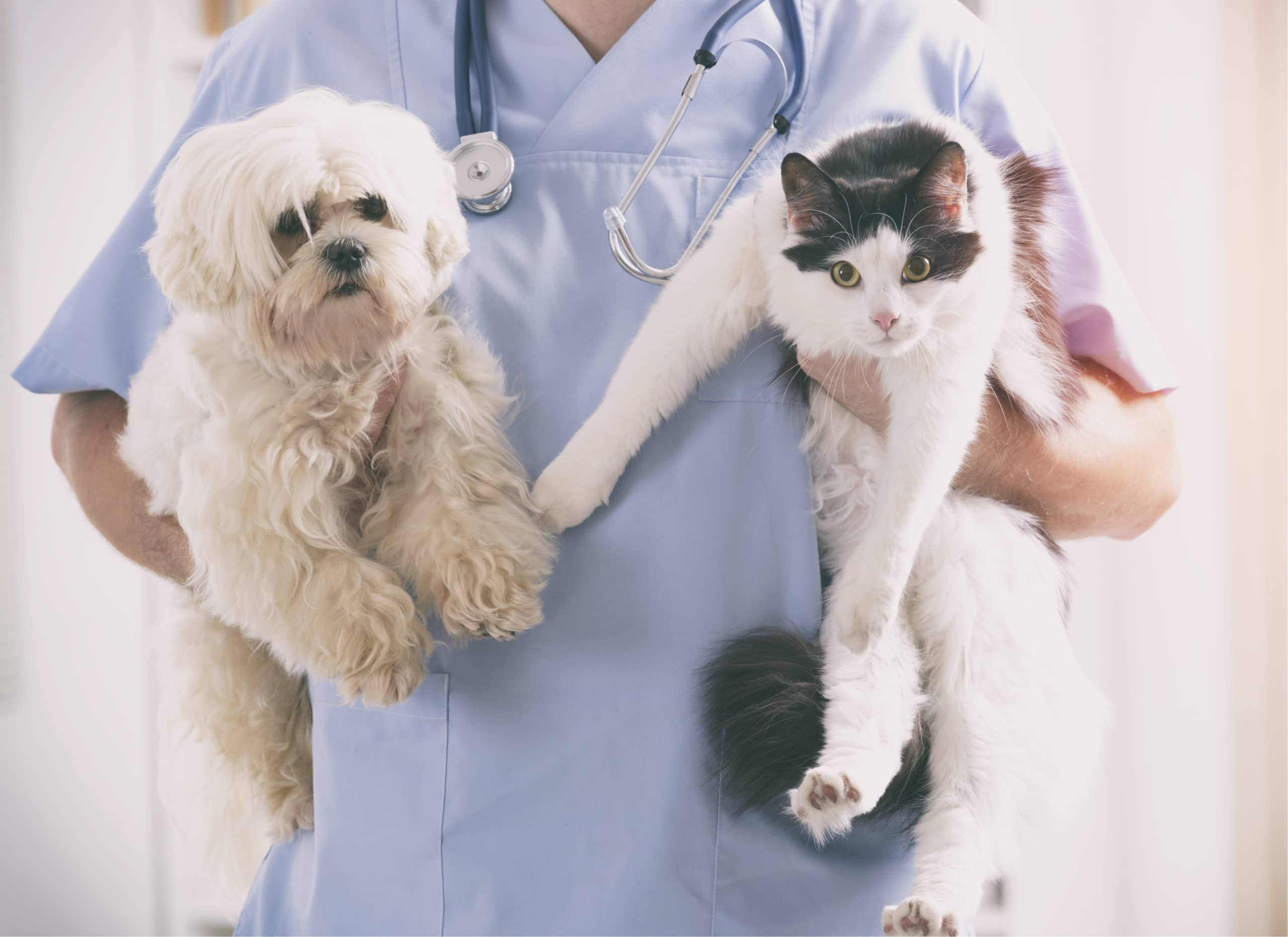 Figo Pet Insurance: Is it the right choice?