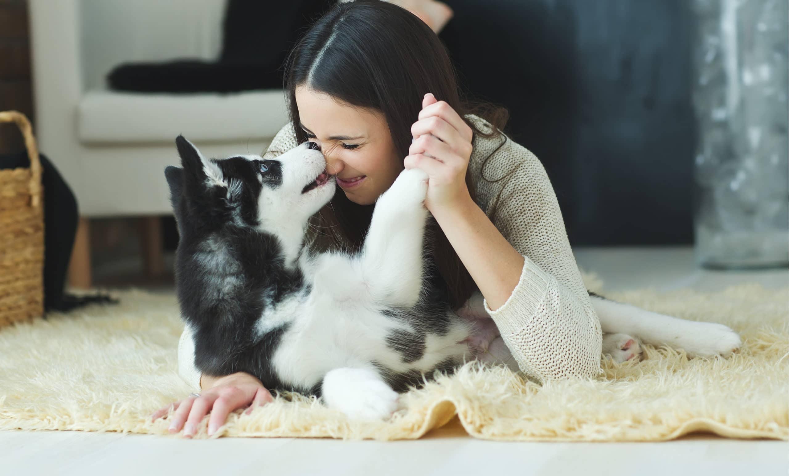 Pet Assure: Is it better than pet insurance?