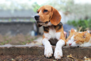 AKC Pet Insurance: Is it the right choice?