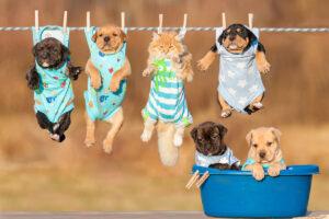 Lemonade Pet Insurance: Is it the right choice?