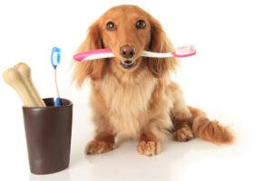Pet Dental Insurance: Do You Really Need it?
