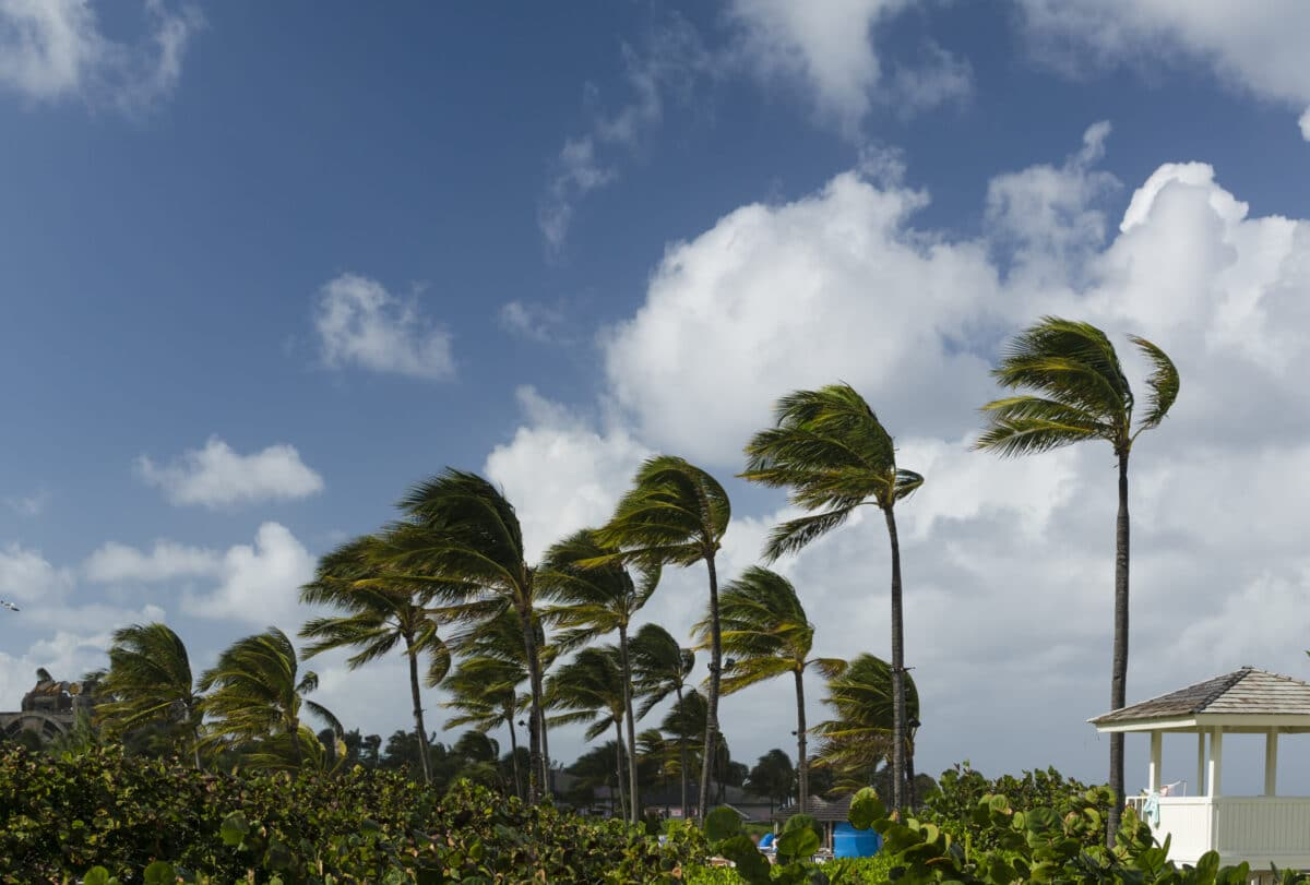 The Homeowner's Guide to Wind Mitigation (2020)