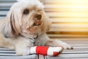 How Does Pet Insurance Work?