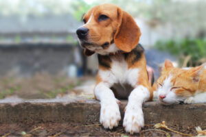 Eusoh Pet Insurance: Is it the right choice?