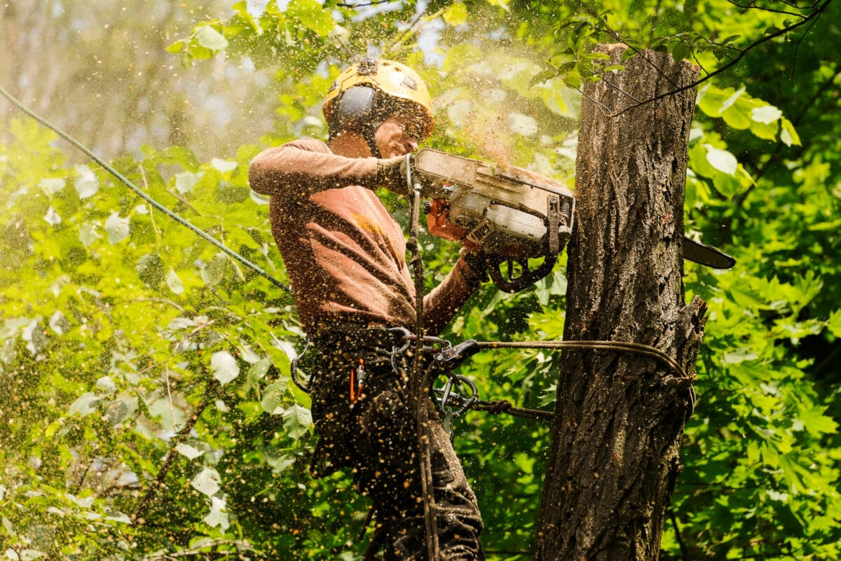 Does Homeowners Insurance Cover Tree Removal? (2020)
