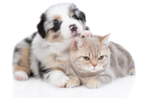 Hartville Pet Insurance: Is it the right choice?
