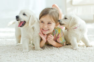 Walmart Pet Insurance: Is it the right choice?