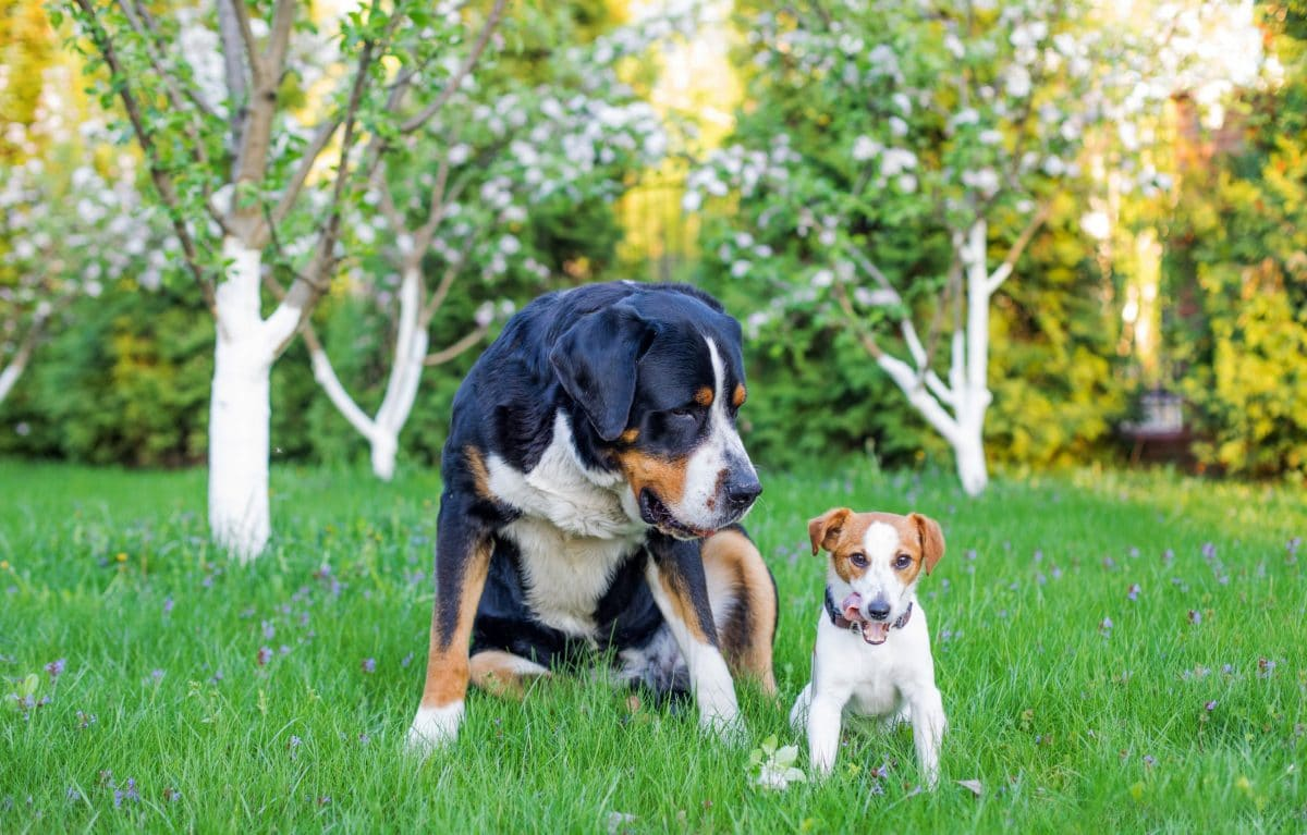Allstate Homeowners Insurance Dog Breed Restrictions(2021)
